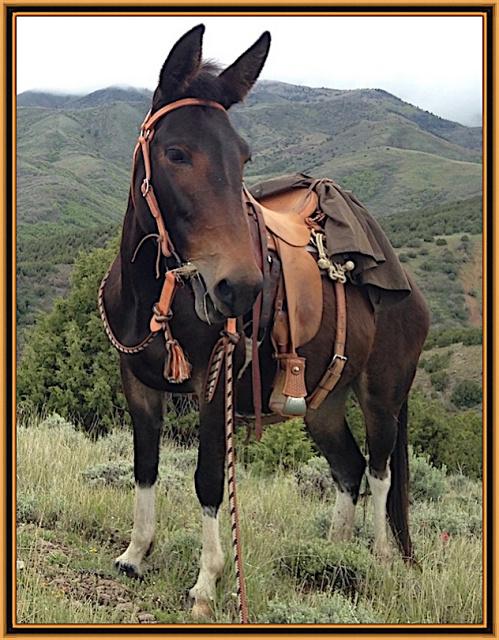 Amish Mule Tack - Amish Horse Tack